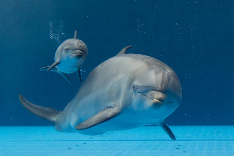 nato un piccolo delfino all'acquario di genova