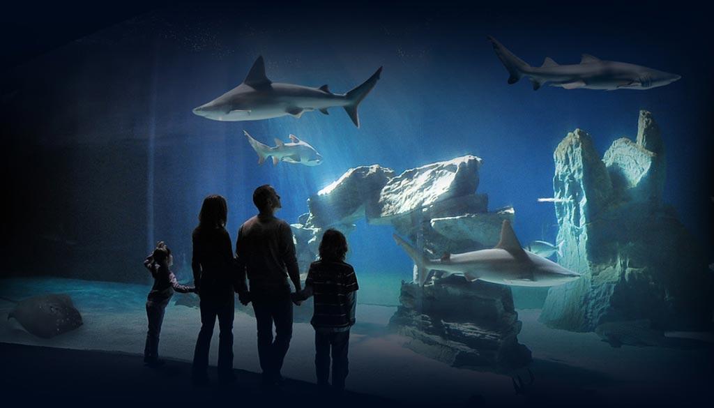 carnevale con i bambini all'acquario di genova