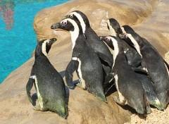 zoo marine parco tematico roma