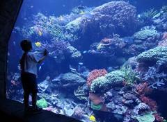 show e spettacoli a seaworld orlando