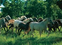 cavalli-lipizziani-slovenia_1