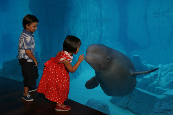 Family destination valencia week dal 1 al 10 giugno con for Oceanografic telefono