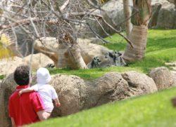 Bioparc di Valencia con i bambini