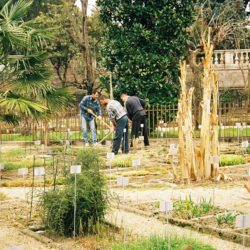 unesco giardini botanici di padova