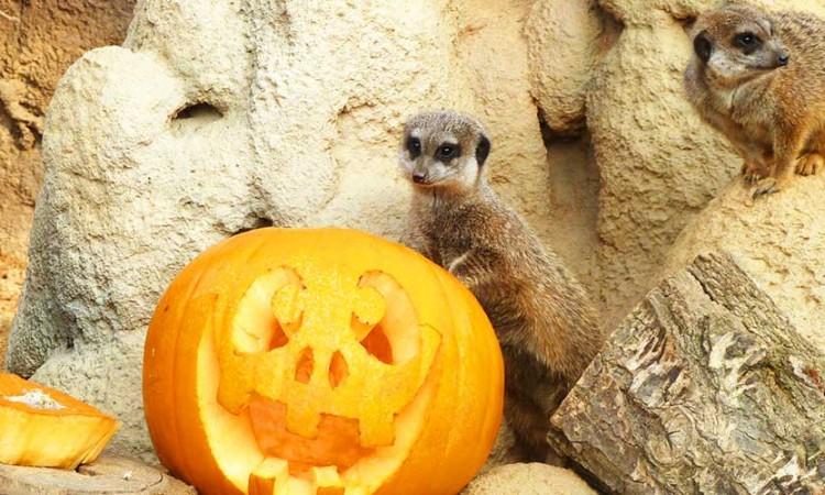 torino-halloween