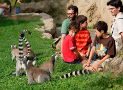 bioparc-valencia-lemurs-in-madagascar_baja