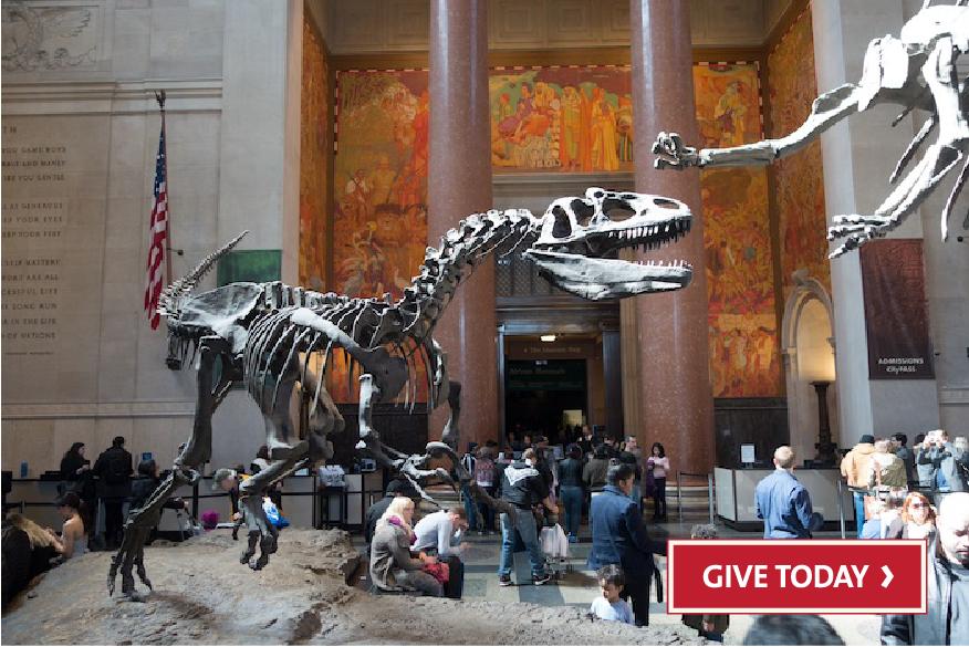 Museo Storia Naturale New York.A New York Imperdibili Museo Di Storia Naturale E Lo Zoo