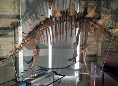 museo di storia naturale di londra charles darwin