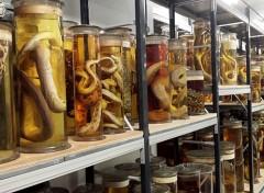 andare al museo di storia naturale di londra con i bambini