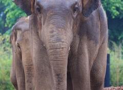 andare allo zoo di dublino con i bambini