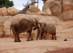 zoo di valencia