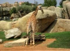 animali allo zoo di valencia