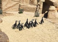 zoo marine parco divertimento roma