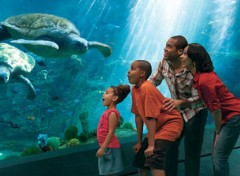 parco divertimenti per famiglie seaworld orlando