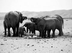 viaggio per bambini in sud africa alla ricerca dei big five