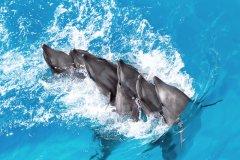 dauphins marineland
