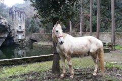 cavallo e laghetto