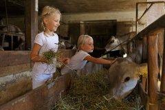 Südtirol Gallo Rosso