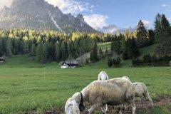 Bimbi-e-Caprette-Tra-le-Dolomiti-Hotel-Mirabello