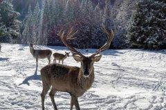 Family-Trekking-Hotel-Mirabello-Dolomiti
