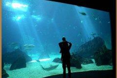 parco-oceanografico-di-lisbona
