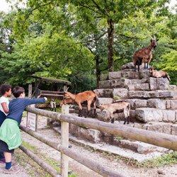 foresta di sauvabelin per bambini a losanna