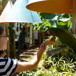 downtown-miami-jungle-island-parrot-w-child-ws