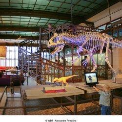 Museum - Institut royal des Sciences naturelles de Belgique