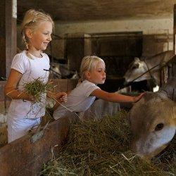 masi e agriturismi Gallo Rosso in Alto Adige
