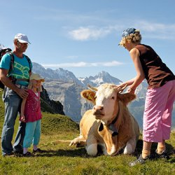 cosa fare e cosa vedere con i bambini sullo jungfrau