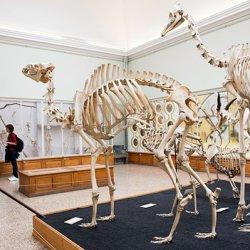 museo di zoologia a losanna