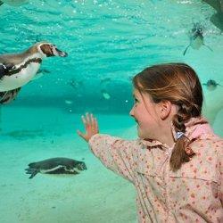 la penguin beach allo zoo di londra