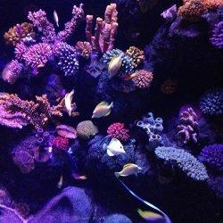 gardaland acquario