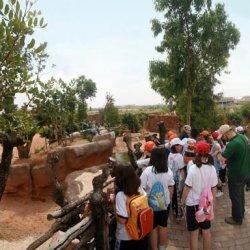 lo zoo di valencia il bioparc