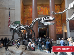 American Museum of Natural History 01