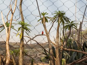 Bronx Zoo, Belmont, Bronx