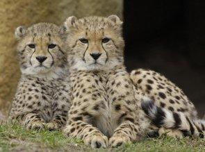 zoo di basilea per bambini