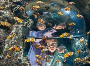4-Gardaland SEA LIFE Aquarium_pesci pagliaccio