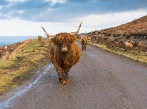 Viaggio in Scozia con la famiglia