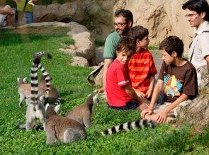 lemuri bioparc valencia per famiglie