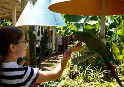 downtown-miami-jungle-island-parrot-w-child-ws