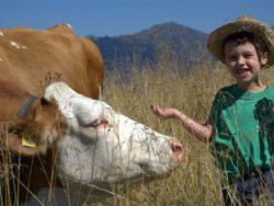 adotta una mucca per i bambini in trentino